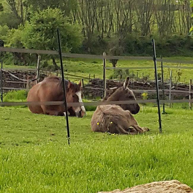 easy cheval d'Emilia Plaisance 2