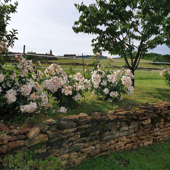 fleurs dans le jardin d'Emilia Plaisance